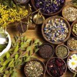 Animali e piante magiche del Salento